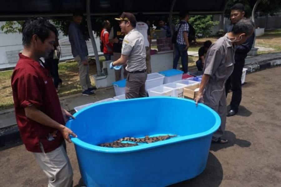 Penyelundupan hewan ilegal di Bandara Soekarno Hatta.